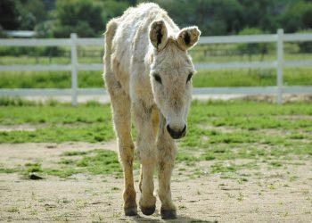 DonkeyLand